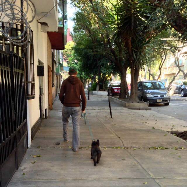 Mexico City dogs