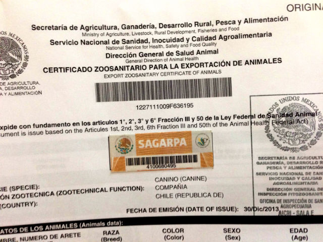 How to get a dog export certificate in Mexico