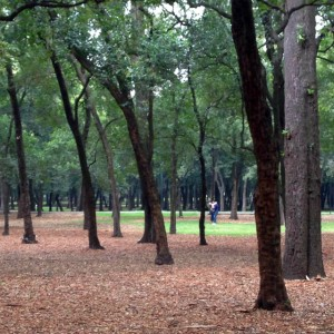 People making out in Chapultepec Park Mexico City