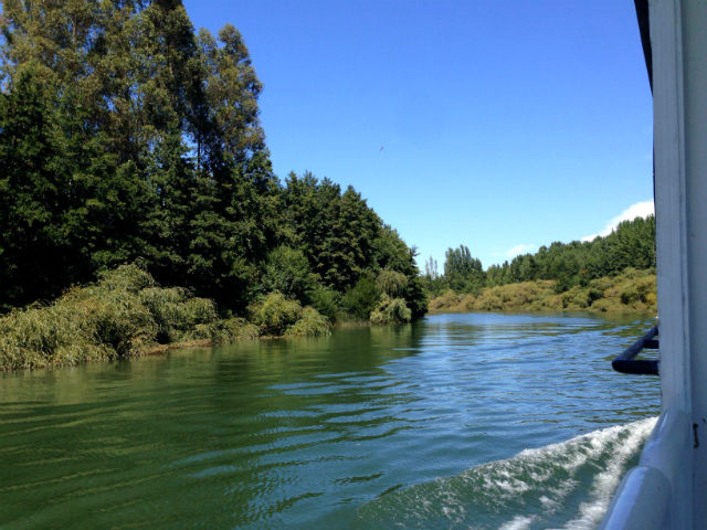 Rivers in Valdivia 2
